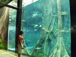 aquarium big tank